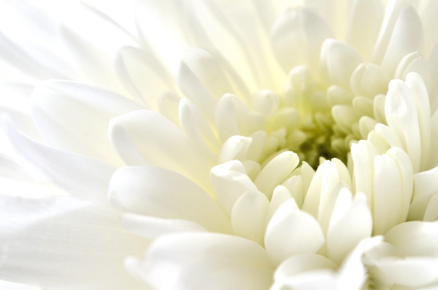 供花の名札の書き方は?名札のつけ方や供花を送る際の注意点も解説!のサムネイル画像