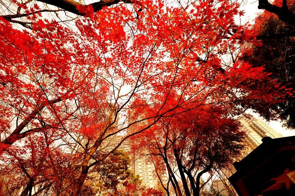 古賀俊昭さんの葬儀|教育に尽力した当選七回の元東京都議会議員のサムネイル画像