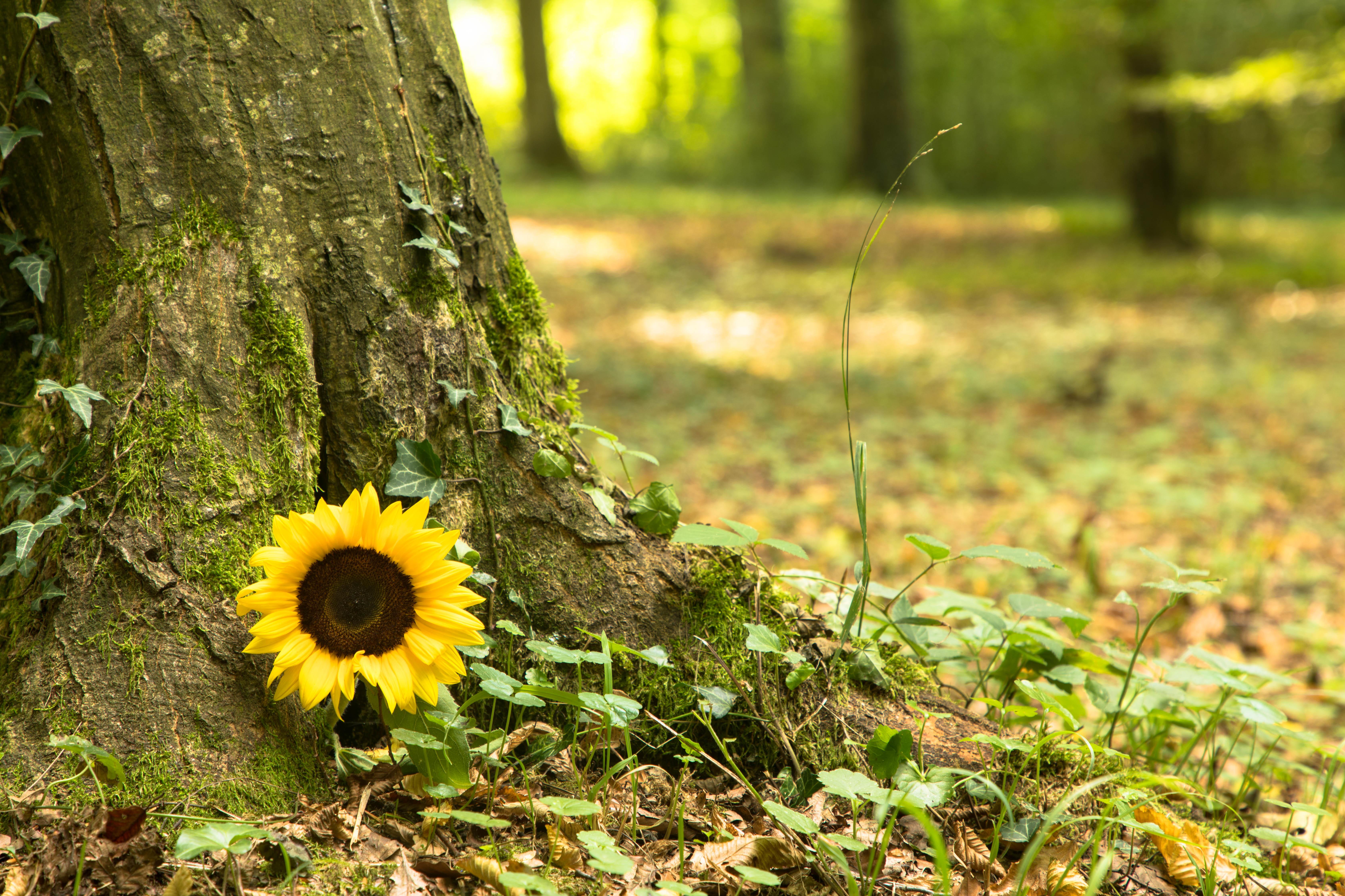 樹木葬とはどんな埋葬法?タイプやメリット、デメリットをご紹介のサムネイル画像